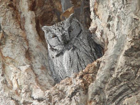 How many species of birds call the Okanagan and Similkameen home?