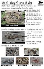 Snake ID Panjabi.png