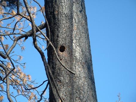 nest hole in PP- Richard Feldman.JPG
