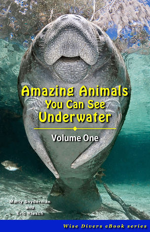 Cover_Amazing Animals.jpg