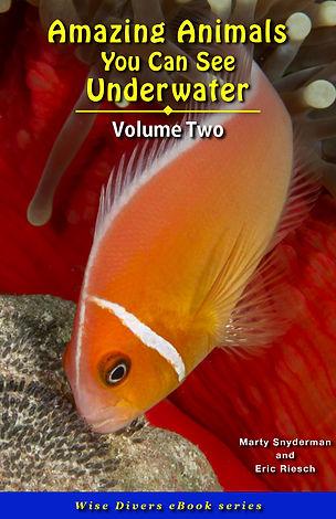 Cover_AA_02  copy.jpg