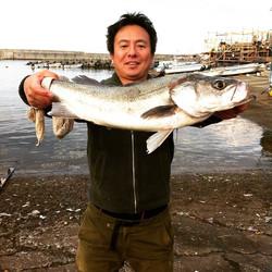 横須賀市大津港貸しボート。