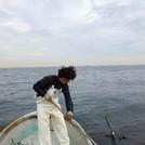 海苔の養殖風景。