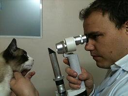 veterinário vila mariana