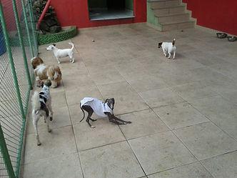 hotel para cães vila mariana