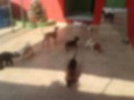creche para cães vila mariana