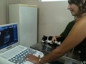 ultrassonografia veterinária vila mariana