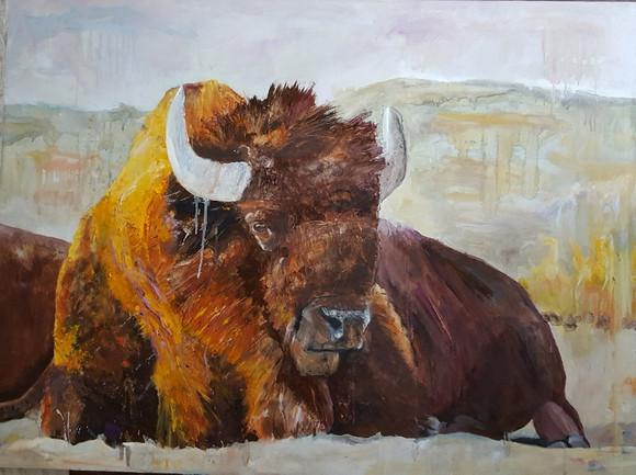 Reclining Bison