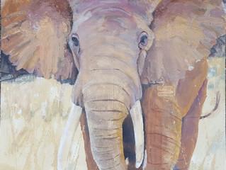 "African Elephant, oil on wood panel 20""x20"""