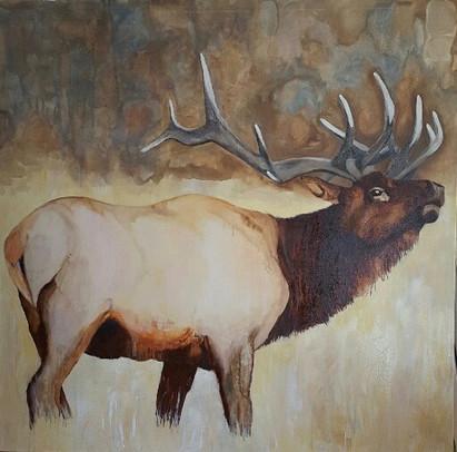 Colorado Elk.