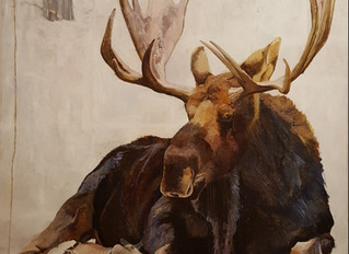 "A Comfortable Moose, 72""x72"", oil on linen"