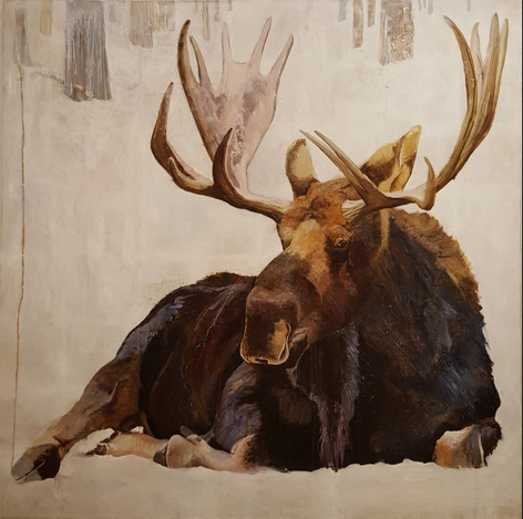 A Comfortable Moose