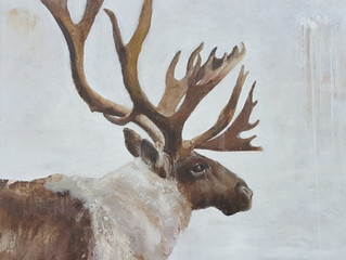 Caribou, 24 x 24, oil on linen