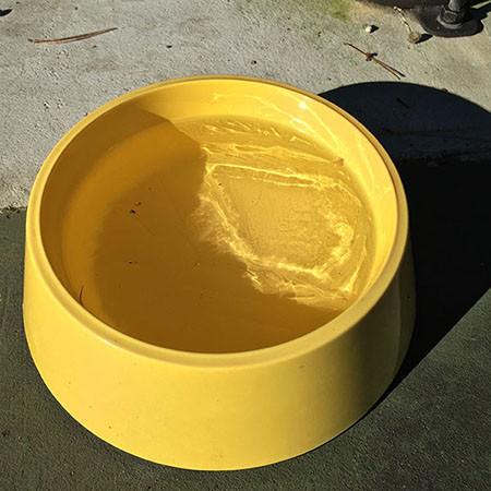 凍った犬の水.jpg