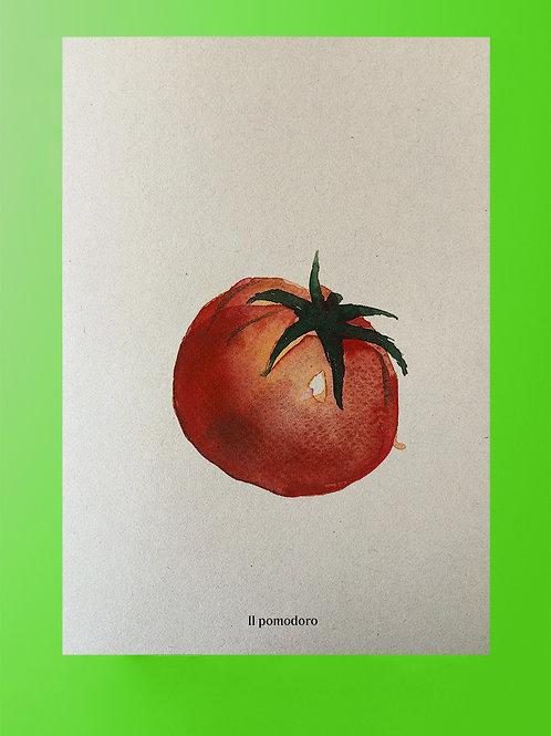 Plakat Tomate