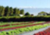 banner_570_396_resources_local.jpg