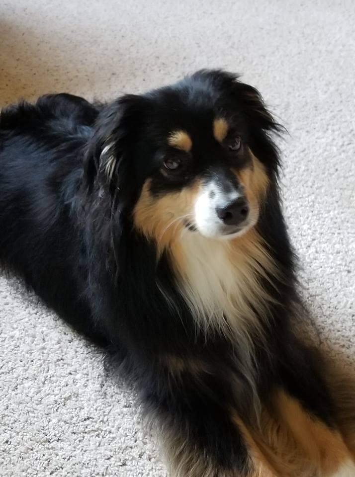 Tucker (TillyxRowdy)