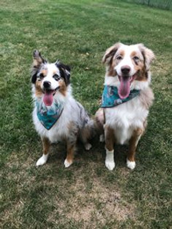 Willow (Rowdy x Lola) and Ember (Rowdy x Stella)