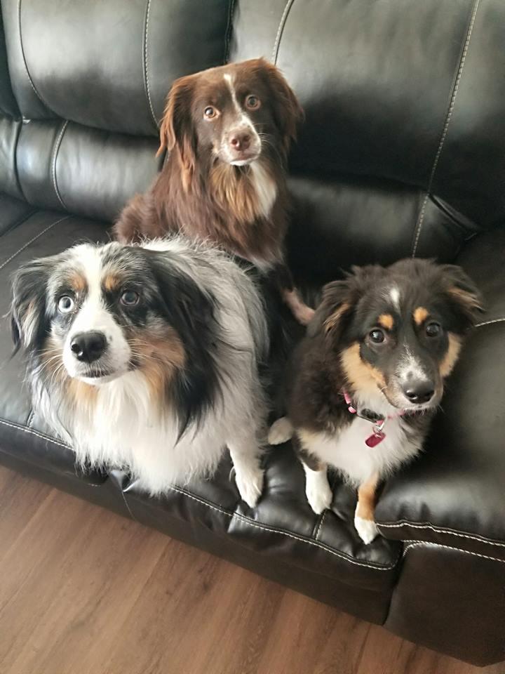 Zoey, Lucy, & Roxie