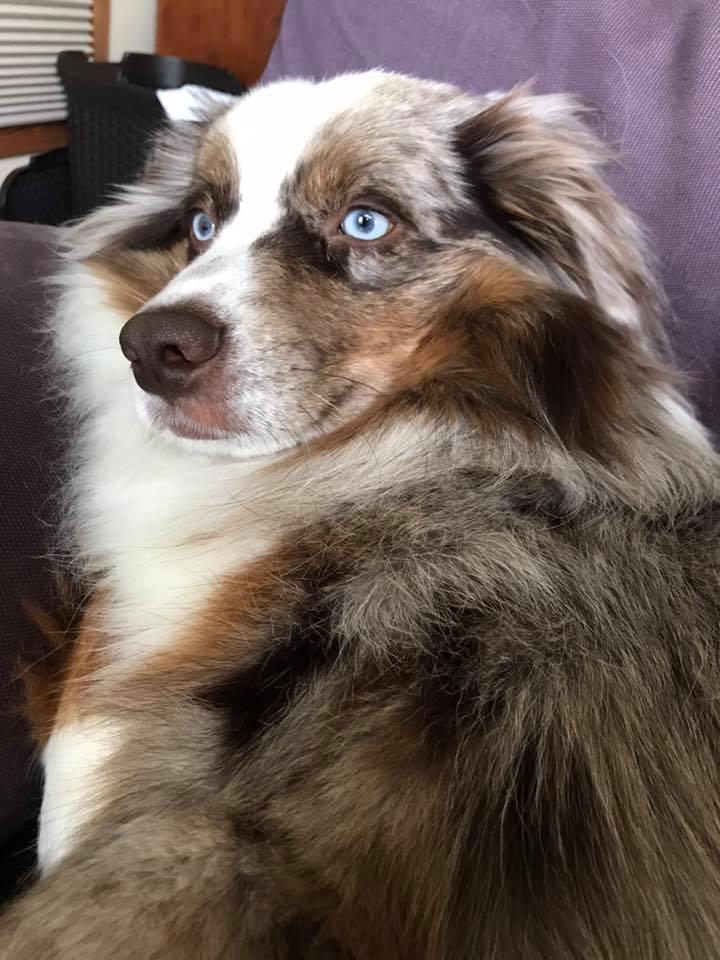 Beau (TillyxRowdy)