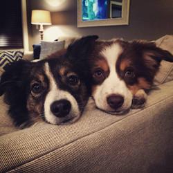 Maci and Riley (Sophie x Rowdy)