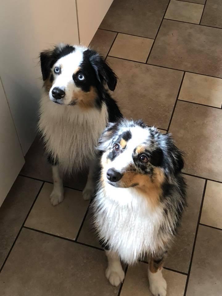 Knox & Remy