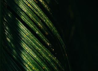 Hosanna - Save Us Now!: A Palm Sunday Prayer