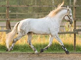 Jäykkä ja jumissa hevosen selässä