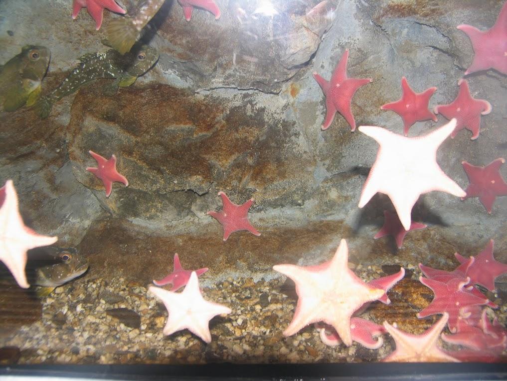 Звезды и под водой и на небе!