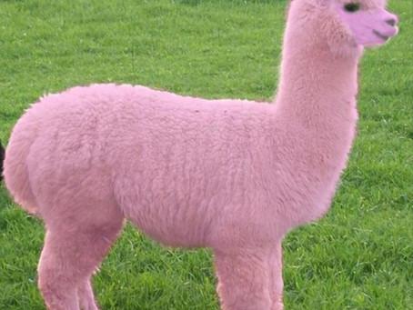 קהילת הלהט״ב של קבוצת Pink Alpaka