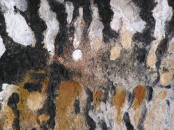 la peau des forêts : détail.