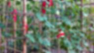 Orto-Botanico_Leone Contini.jpg
