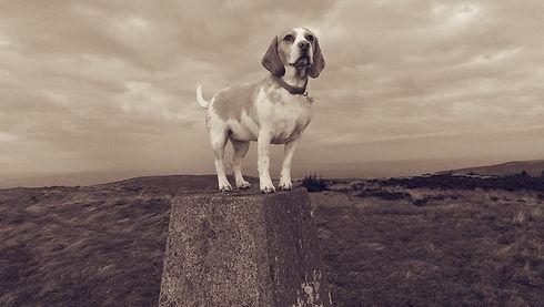 cute dog being walked in ayr south ayrshire