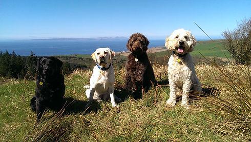 cute dogs by ayr south ayrshire