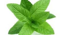 The Benefits of Mint!