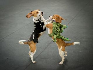 Howl-o-ween Beaglefest2017
