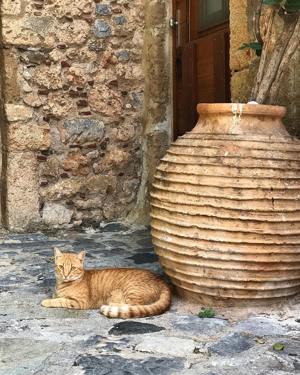 Boskie koty Grecji, wspinanie w Leonidio