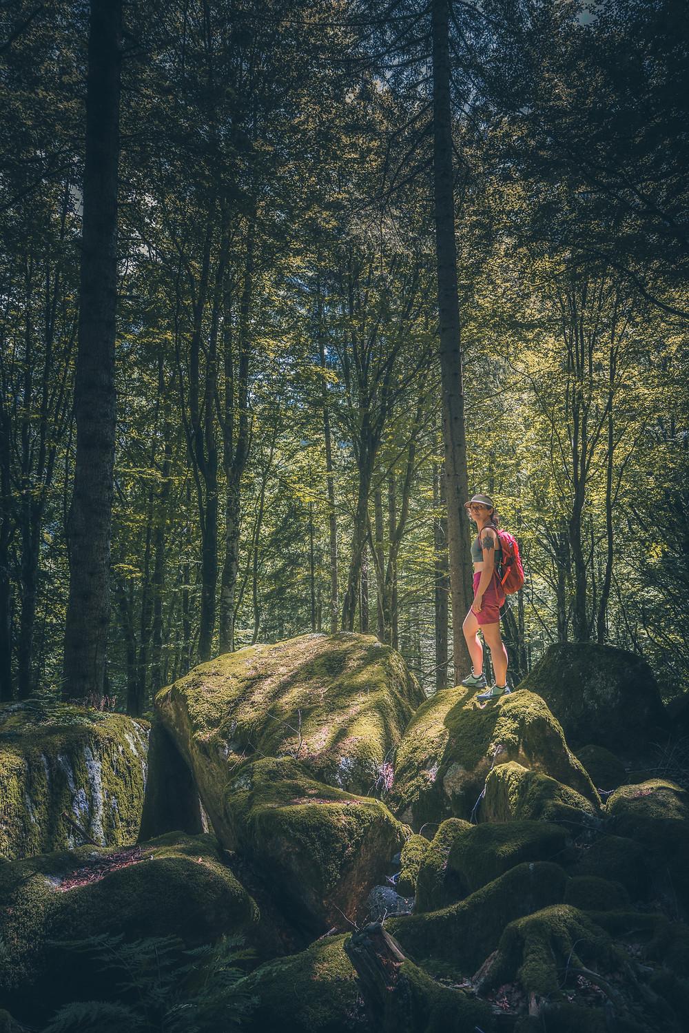 magiczny las alpejski
