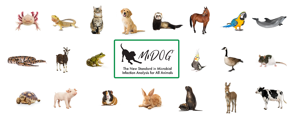 Animals Tested with MiDOG - web version.