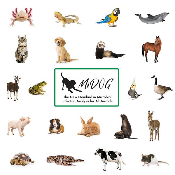MiDOG Test All animals