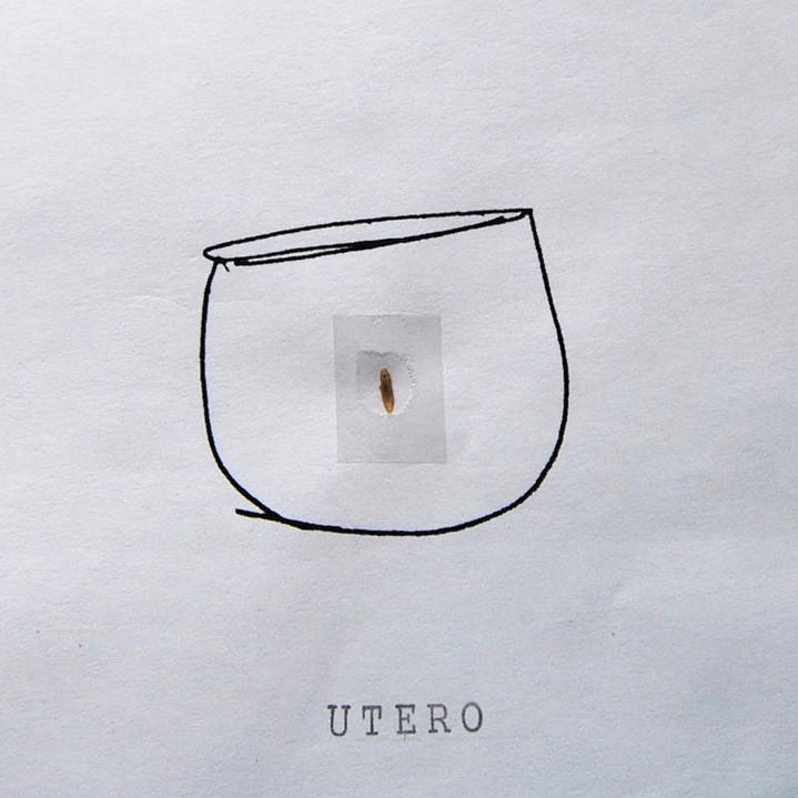 Título: Utero/Pautas