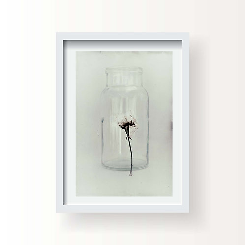 Flora 6 (Printed & Framed)