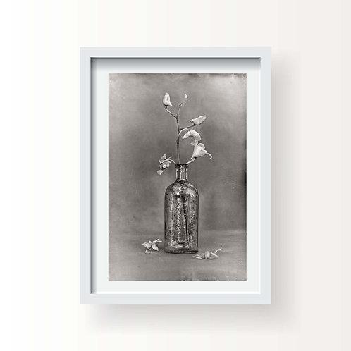 Flora 4 (Printed & Framed)