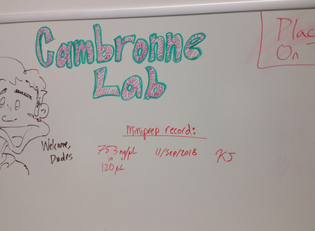 Current Lab Hieroglyphics