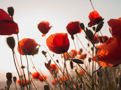 Why I believe tall poppy syndrome is bad for business