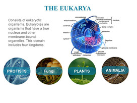 Classification of microorganisms (10).JPG