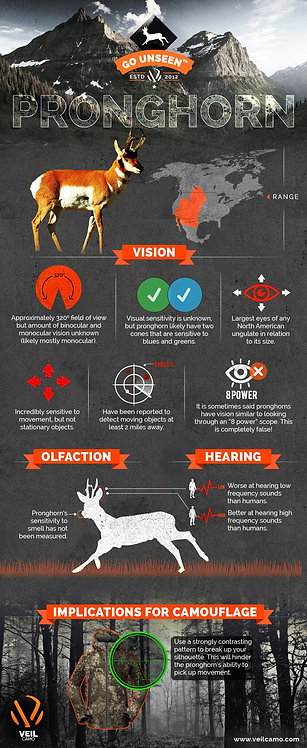 Hunting Pronghorn Infographic