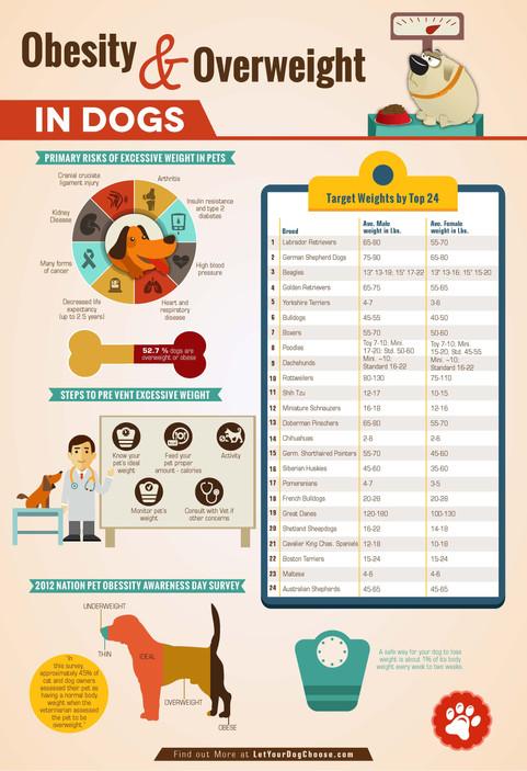 Obesity & Overweight in Dog Brochures