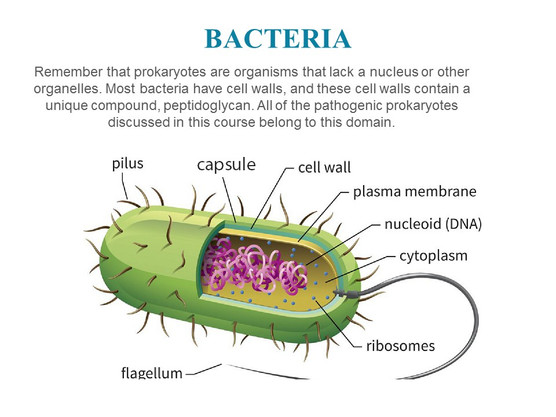 Classification of microorganisms (8).JPG