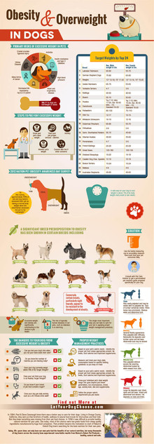 Obesty & Overweight in dogs